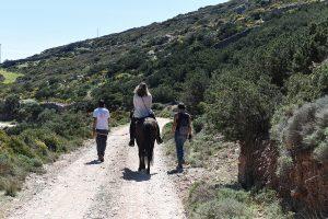 explore Sifnos on horseback