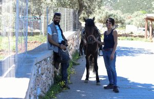 The team at Sifnos Horseriding